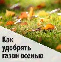 Как удобрять газон осенью