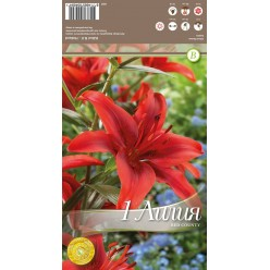 Лилия Red Country 1шт/уп р.14-16 каперс 308282