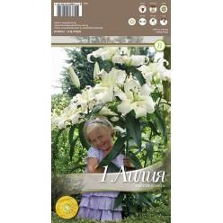 Лилия Pretty Woman 3шт/уп р. 12-14 каперс 308455