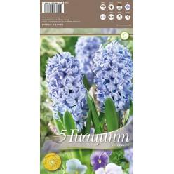 Гиацинт Delft Blue 5 шт/уп р.15/16, каперс 108185