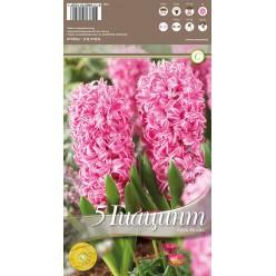 Гиацинт Pink Pearl 5 шт/уп р.15/16, каперс 108190
