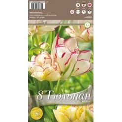 Тюльпан Belicia  8 шт/уп р.11/12, каперс 108071