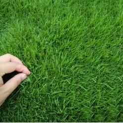 Семена травы газонной Универсал ЭКО 0.9 кг CENTNAS (РП)