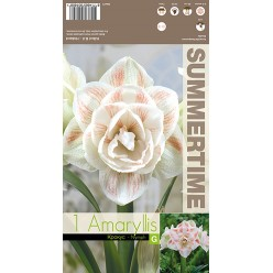 Амариллис Nymph р.24-26  1шт/уп  луковица