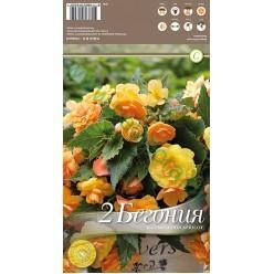 Бегония Illumination Apricot р.4-5  2шт/уп луковица