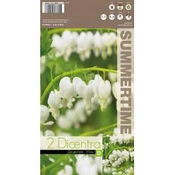 Дицентра spectabelis White р.2/3  2шт/уп  клубень
