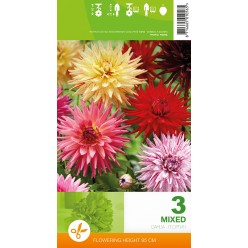 Георгин Cactus Mixed р.II 3шт/уп клубень