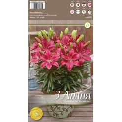 Лилия FantAsiatic Raspberry р.12-14 3шт/уп луковица New