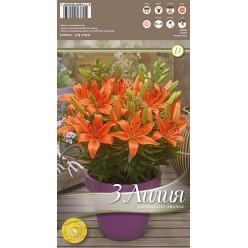 Лилия FantAsiatic Orange р.12-14 3шт/уп луковица New