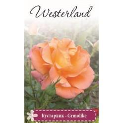 Роза Вестерленд шраб (саж. ЗКС)  коробка