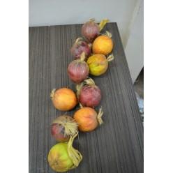 Плод искусственный Лук в связке цветной 12249