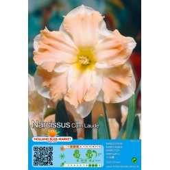 Нарцисс Cum Laude 5шт р.12/14 луковица 35150