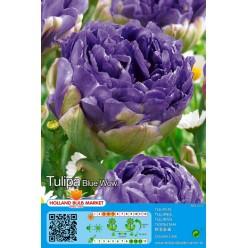 Тюльпан Blue Wow 5шт р.11/12 луковица 12230