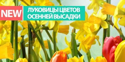 Луковицы цветов осенней высадки